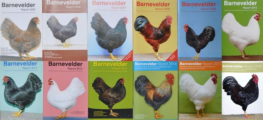 Barnevelder-Reports Kopie1